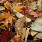 Uses for Fall Leaves | cash house buyers